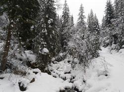 Tiefer Winter - Schneeschuhwanderung Schwanden