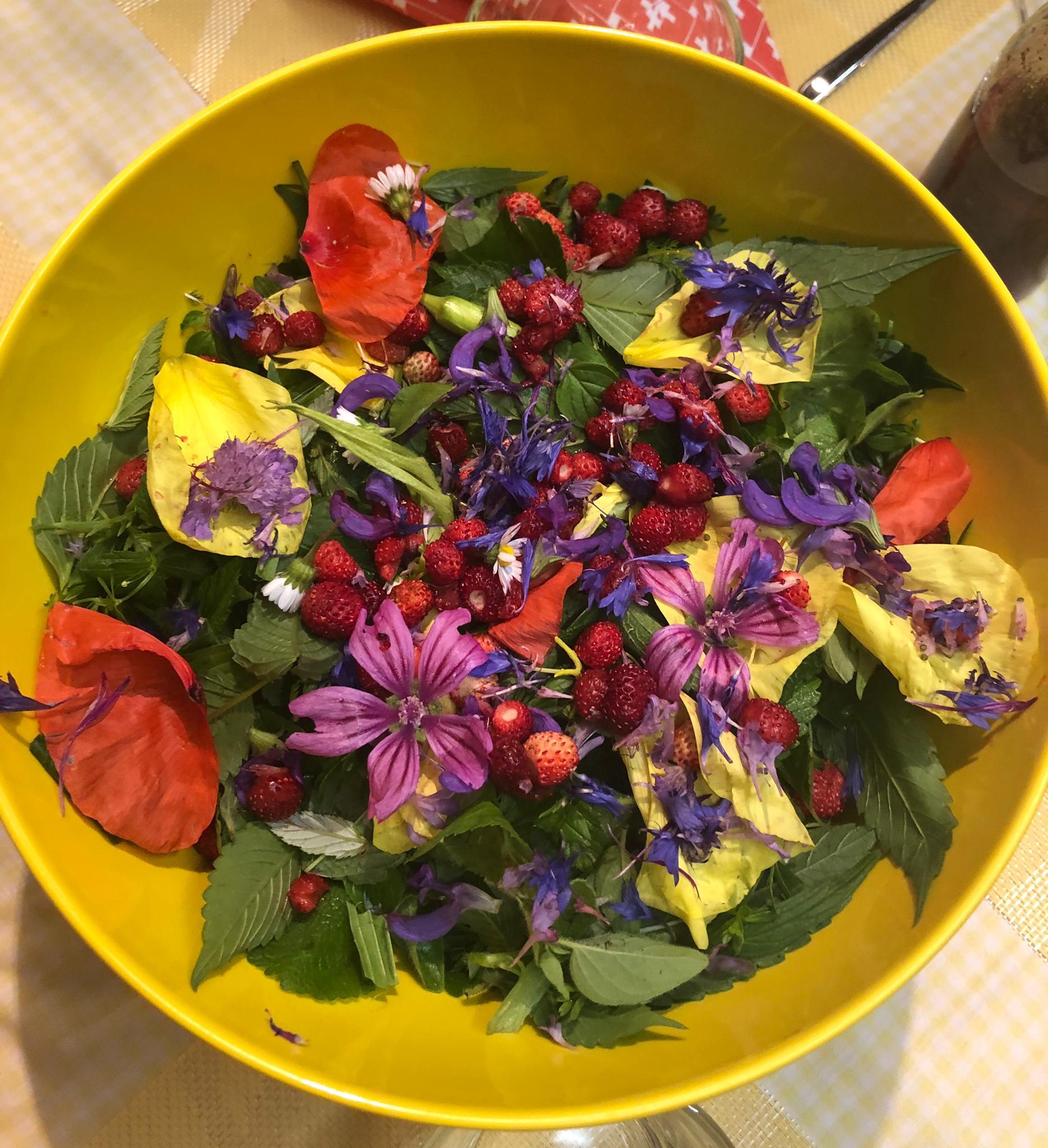 Wildkräuter Salat Sommer