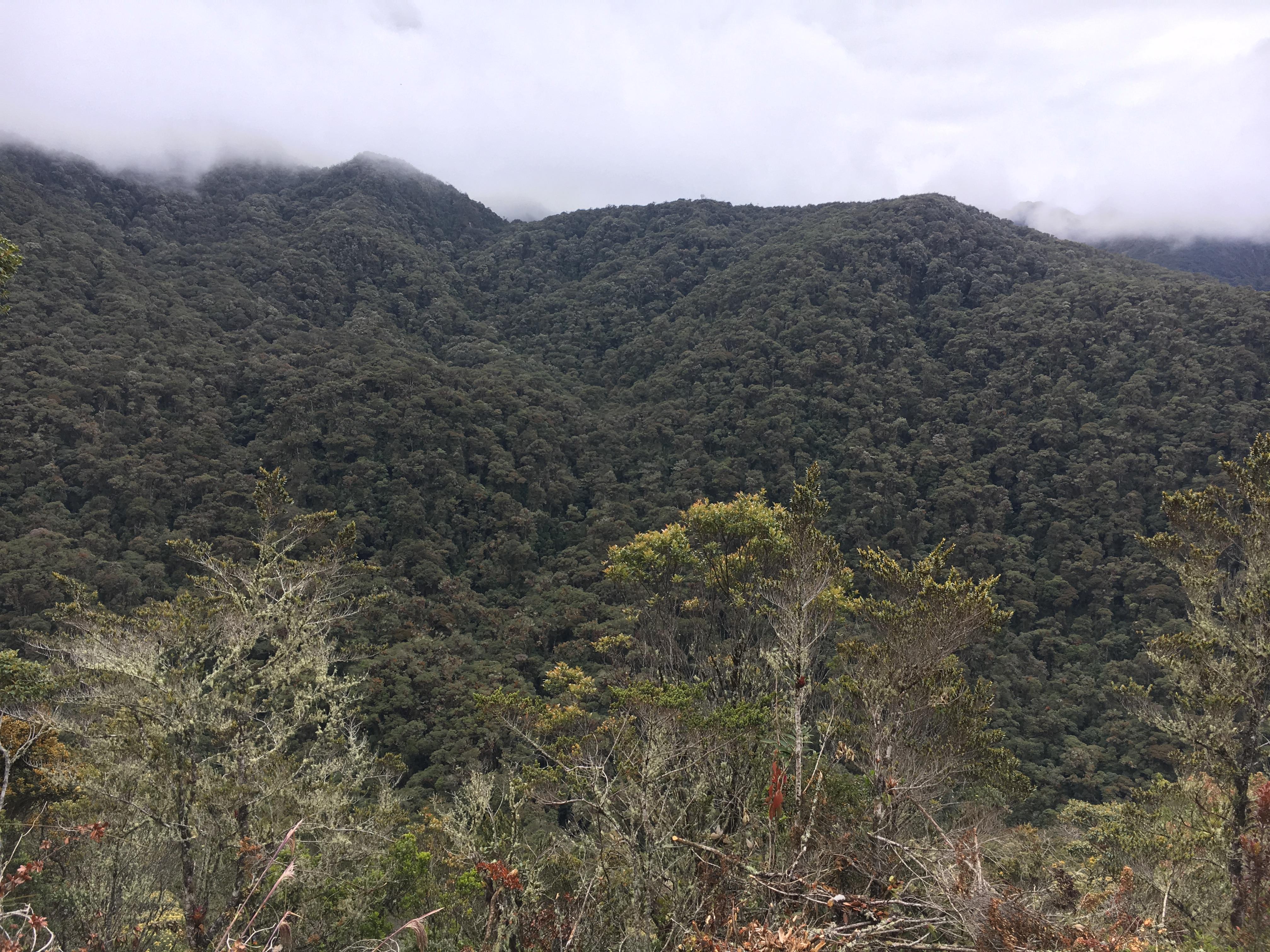 Besteigung Nevado Tolima