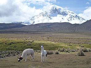 Berg Sajama mit Lamas