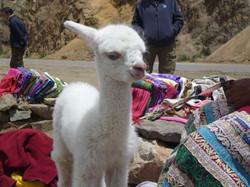 Colca Canyon_Peru_Daniel