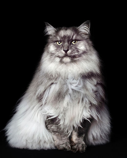 cat-photograph-01