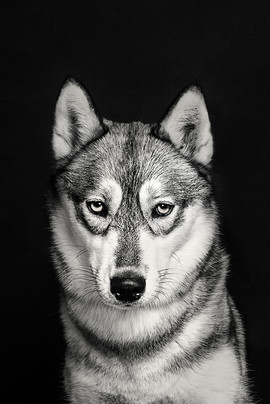 dog-photography-40.jpg
