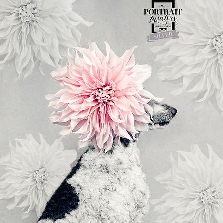 dog-portrait-award5.jpg