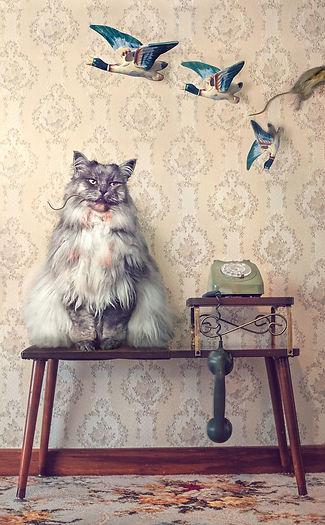 cat-photography-01.jpg