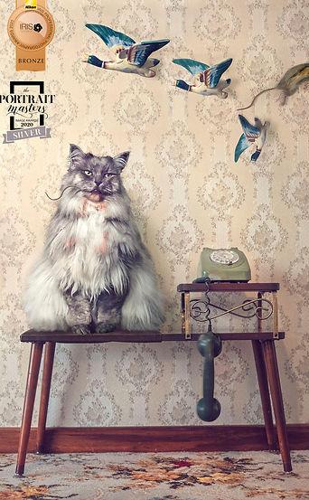 cat-portrait-award.jpg