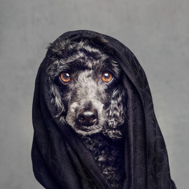 dog-photography-30.jpg