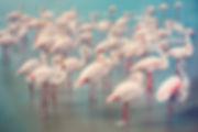 flamingos camargue fine art