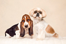 dog-photography-61.jpg