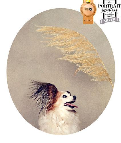 dog-portrait-award4.jpg