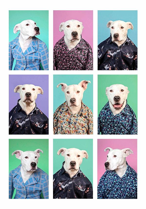 dog-photography-63.jpg
