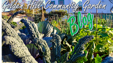 Welcome to the Garden Blog!