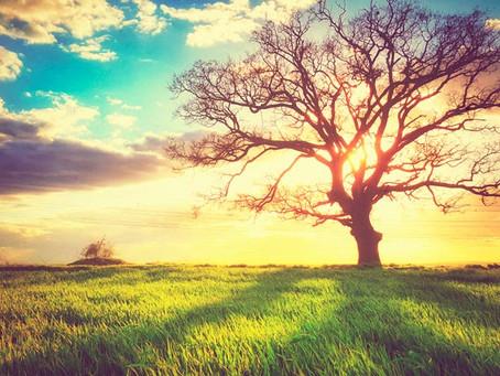 L'amour est le ciment qui unit les êtres et les univers