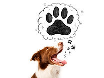Dogs_Border_Collie_Paws_493824_2048x1536