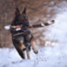 animal-canine-cold-1800314_edited.jpg