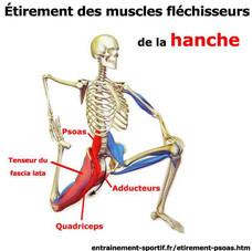 psoas + quadriceps