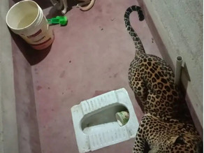 Miraculous survival: A tale of stray dog and a leopard