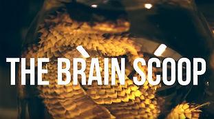 Brainscoop.JPG