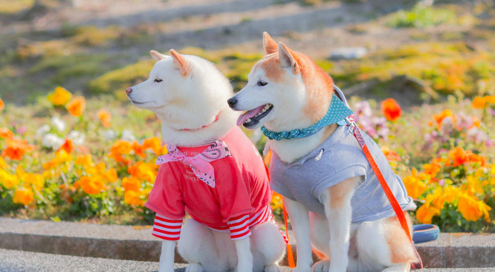 #春 お揃いの服でお散歩。