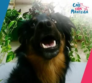 cachorro vira lata latidos agressividade medo reatividade consulta comportamental adestramento cachorro cães Cão Com Manteiga treinamento canino reforço positivo