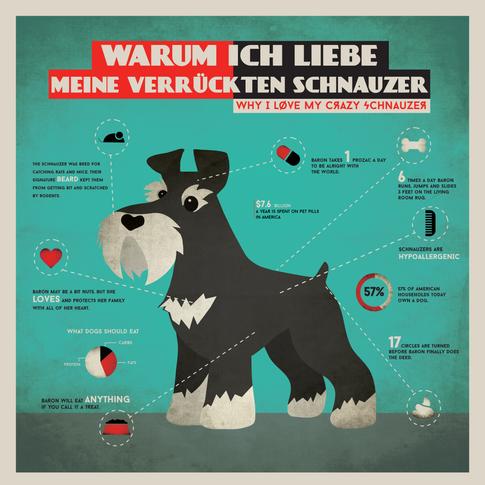 Crazy Schnauzer Info Graphic