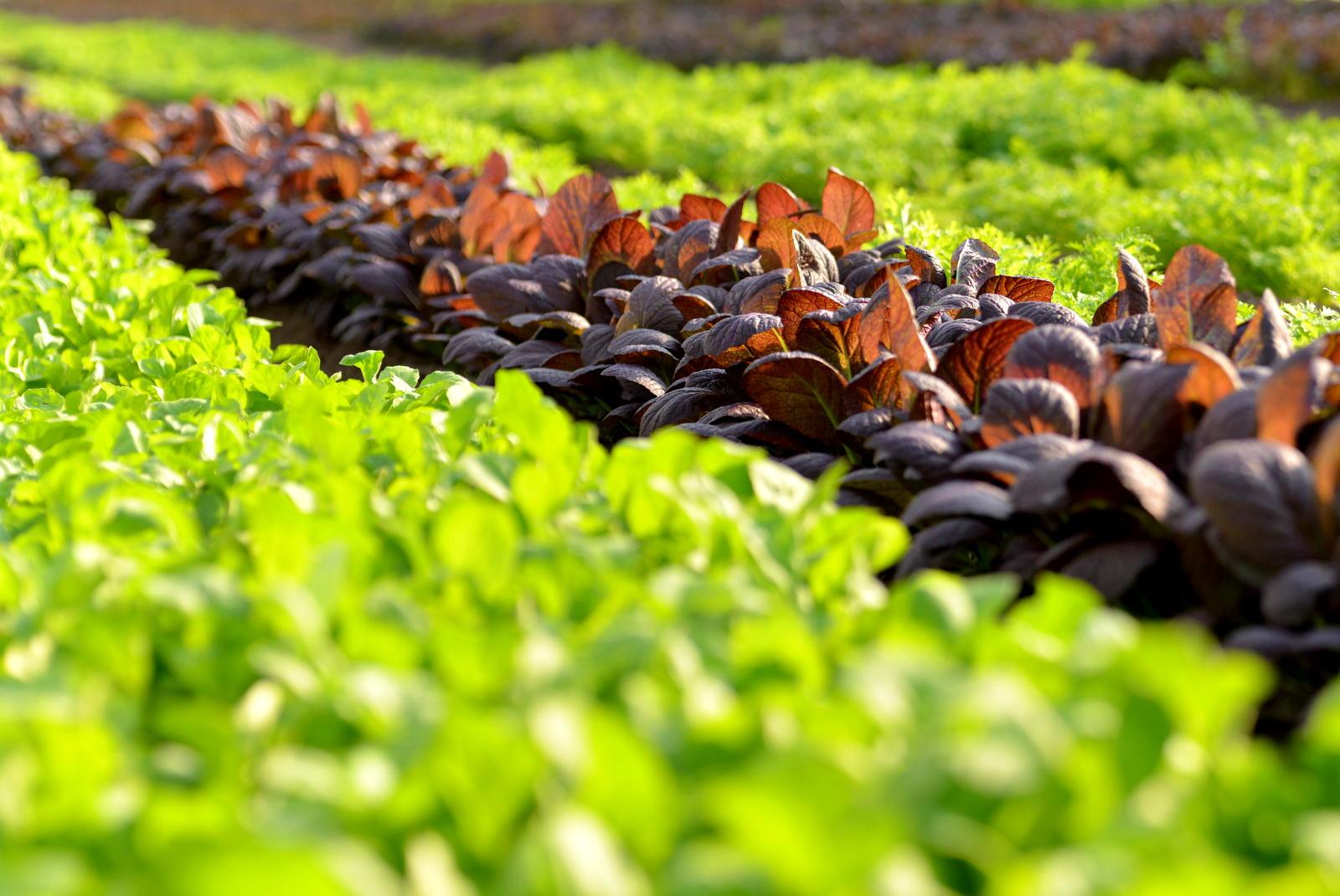 元気に成長する野菜