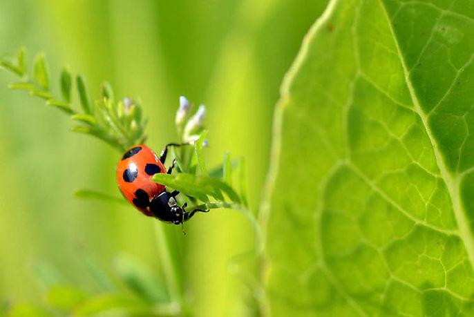 Ladybug organic growth.jpg