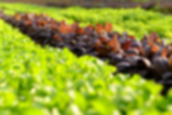Organic cultivation.jpg