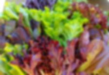 Musk run salad.jpg