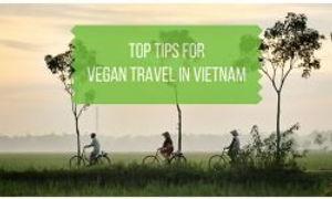 Top-Tips-for-Vegan-Travel-in-Vietnam-250