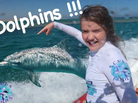 Dolphin Delight at Marsa Alam, Egypt