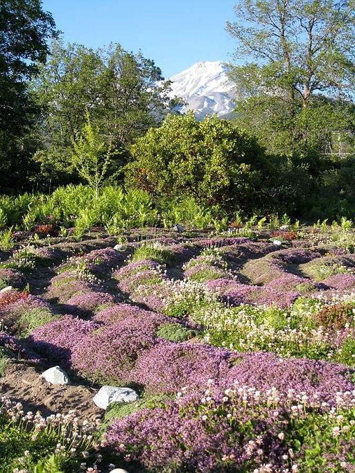 peace garden.jpg