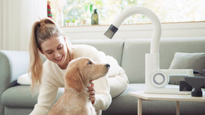 Groomer's First Choice, Hassle-free Pet Dryer: DUZ Pro V3