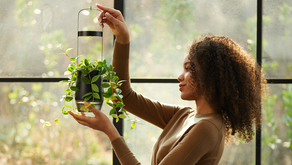 [Live on] s.pot: Help Your Small Indoor Plant Grow In Ideal Conditions
