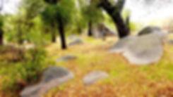 zen garden1.jpg
