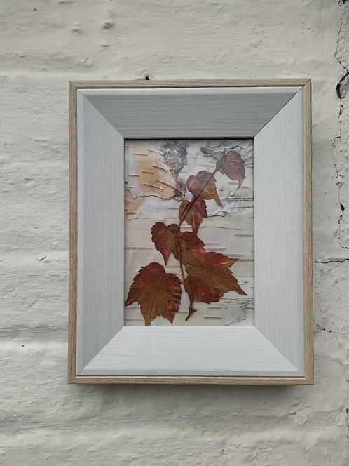 Bronze Ivy. Framed botanical art