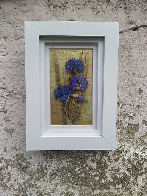Cornflowers. Framed botanical art