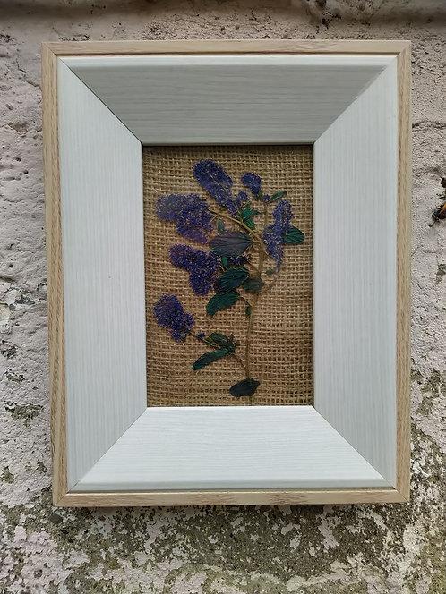 Wind. Framed botanical art