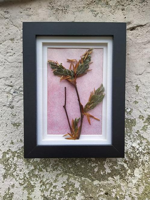 Branch. Framed botanical art