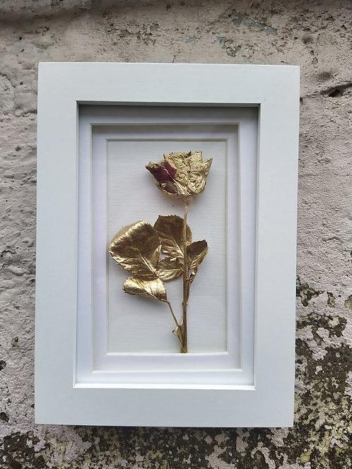 'Golden Rose'. Framed botanical art