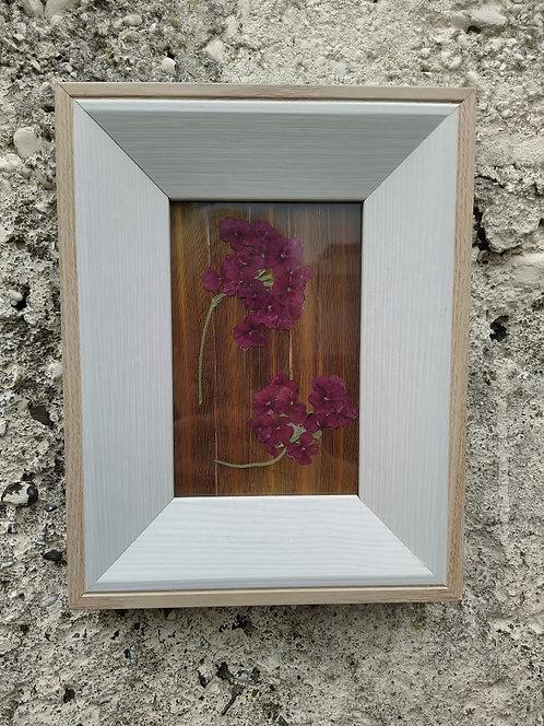 Garden Verbena. Framed  botanical Art