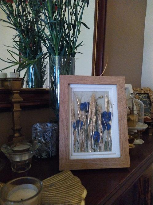Cornflowers'. Framed botanical art