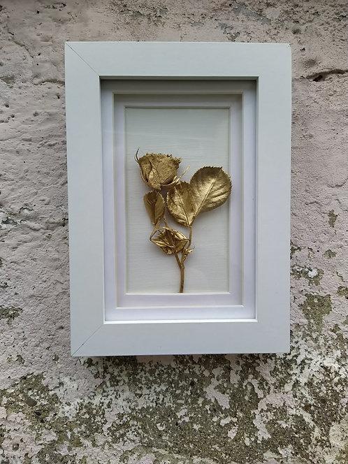 Golden rose. Framed botanical art