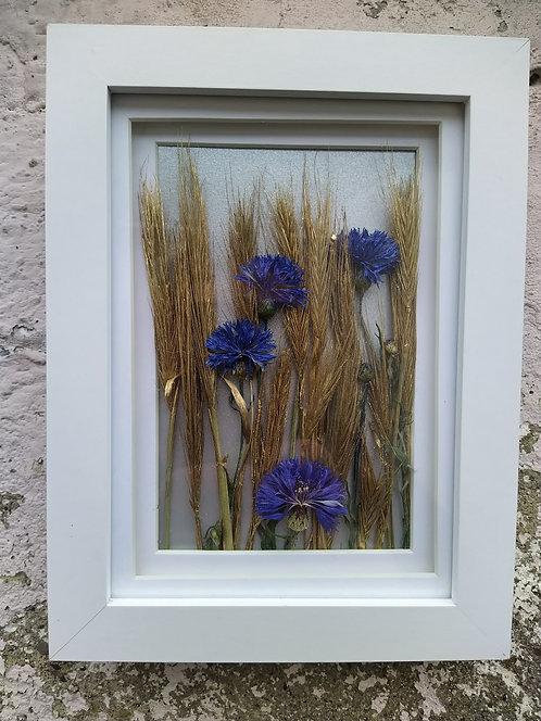 Cornflowers. Framed botanical art