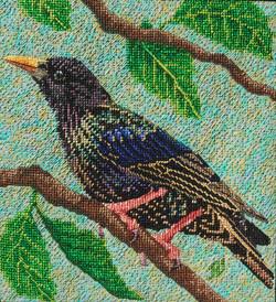 Sara's Starling