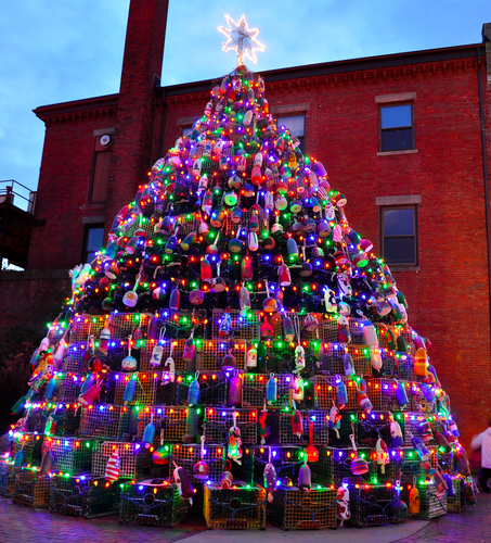 Gloucester's Lobster Trap Tree