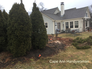 Before & After: Arbor Work