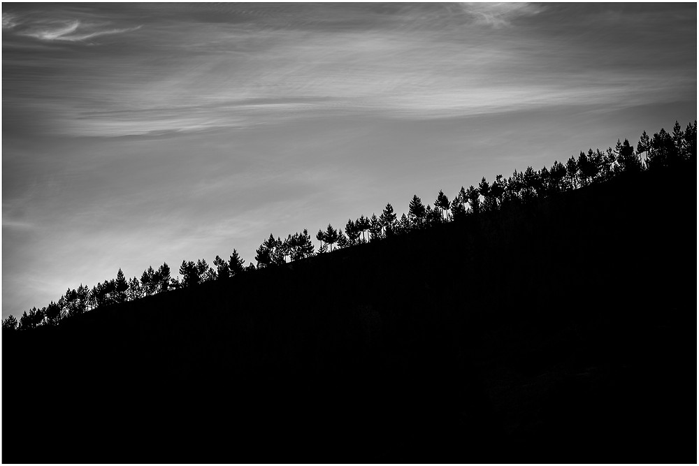 Black and white sunset silhouette of pine trees on a ridgeline in Central Otago, New Zealand