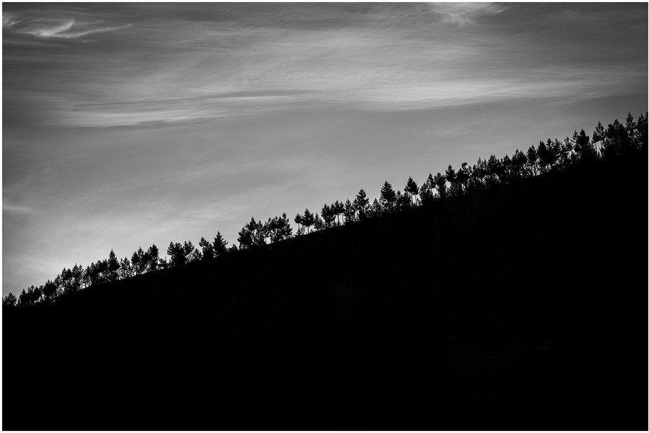 Pineridge - Pine tree silhouettes at sunset, Central Otago...
