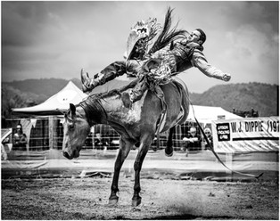 Cowboy and his bucking bronco...